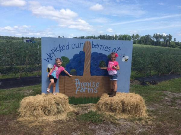 We picked our berries at Promise Farms!
